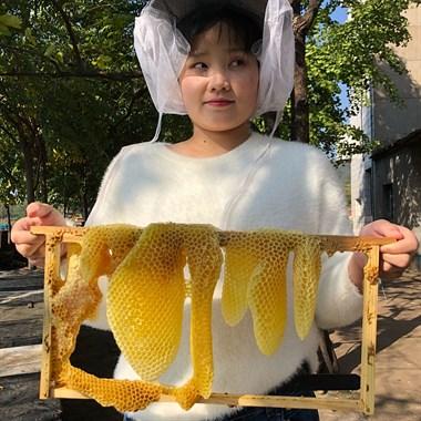 蜂胶对糖尿病的作用。
