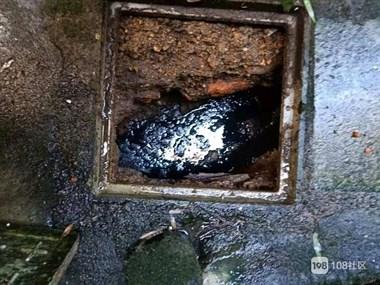 看到这个我吐了!城南某烤鸭厂,竟在粪池旁做酱鸭