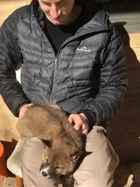小哥捡到一只小奶狗,兽医检查后眉头紧皱:这只狗可不简单!