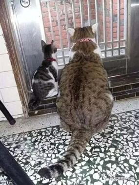 喵:长大后我就成了你,这样的胖子…