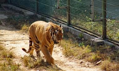 诸仙洞动物园拍动物