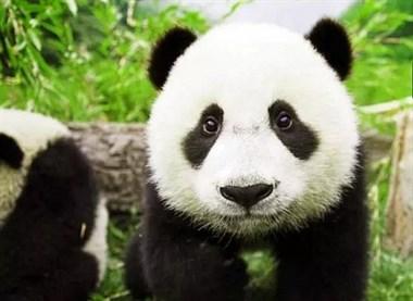 杭州野生动物园,秋天的狂欢!周未一起去看望下小动物们吧