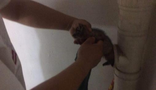 生命无大小!镇巴佬爱猫掉下水道 最后从水管得救只因...
