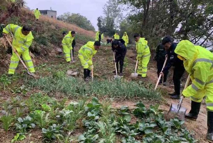 昌江河边4000多平菜地被清理!几十名城管雨中铲菜