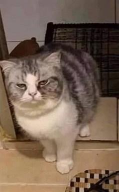 铲屎官凌晨三点上厕所,猫咪困到睁不开眼也要陪着。