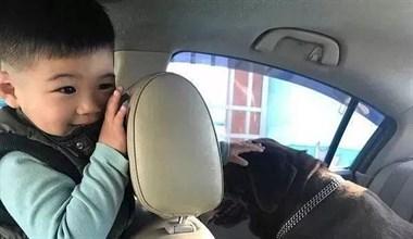 儿子跟狗狗做的一个举动,让爸爸当场玻璃心碎满地!