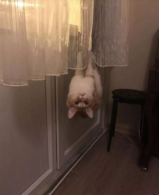 """""""我家猫,每隔24小时要充电的啊喂!"""""""