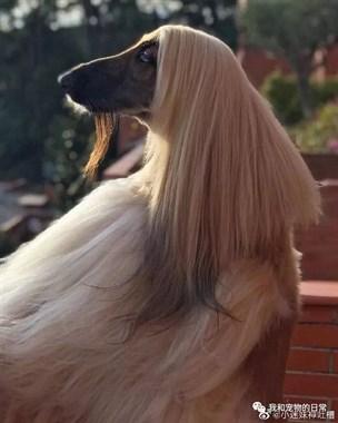 狗的头发都比我们多,我们的发际线还没狗的好呀!