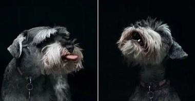 如果能和狗狗沟通,你最想告诉它什么?