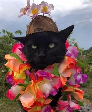 千万别跟这只猫比谁项链多!它会让你输得明明白白!