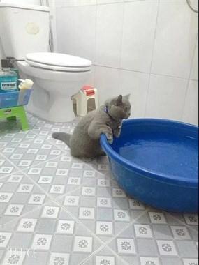 爆笑!主人准备好了浴盆给猫洗澡,结果它做出了这样的动作…