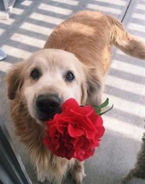 狗狗送给主人的奇葩礼物,让人哭笑不得!