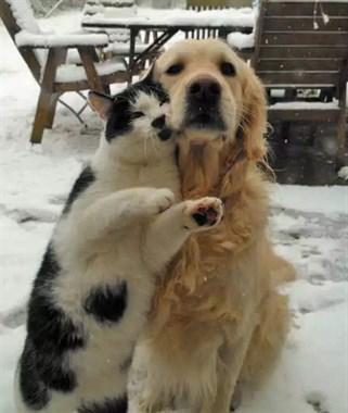 享受冬天,享受雪的宠物们