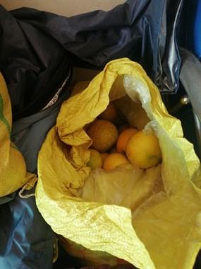 出常山胡柚