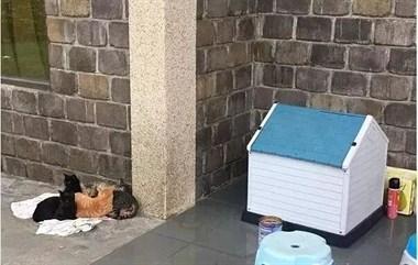 砸钱买了间豪宅给流浪猫,结果猫咪的选择却相当出乎意料!