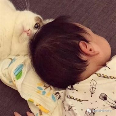 萌化了!胖猫保姆趁妈妈不注意,居然偷吸小婴儿……