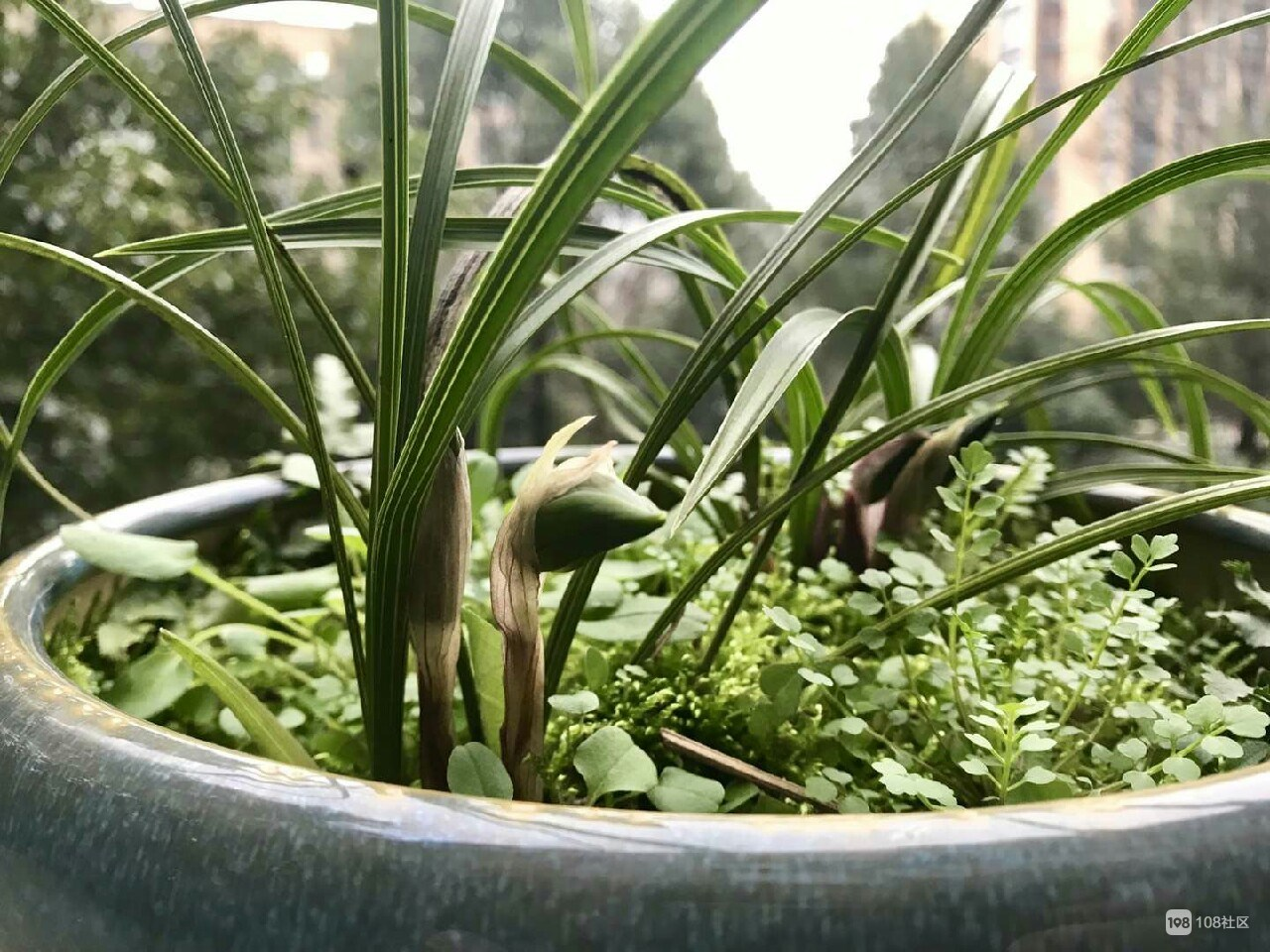 满满干货!社友分享5种兰花养殖经验,看完秒变绿植高手