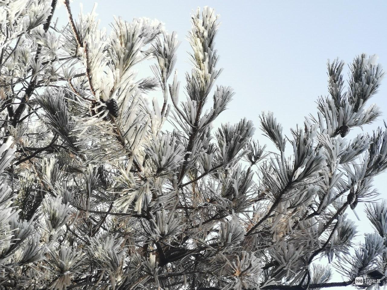 衢州下雪了?桃源尖美如冰雪世界!坏消息是这些地方要停电