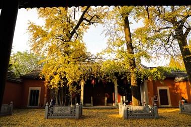"""太美了!孔庙一地""""金黄"""",入目的风景宛如绚烂的油画"""
