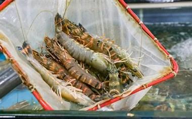 """买海鲜""""套路""""多?学会这3个买菜技巧,再也不怕海鲜老板坑了"""