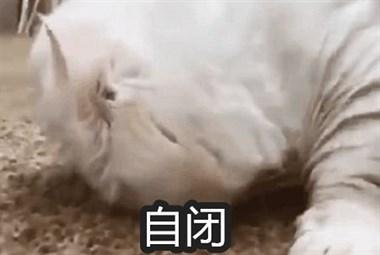 猫猫正在睡觉,主人碰了一下它的小鼻子…反应可爱爆了!