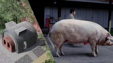 猪坚强将乔迁新家:50平,独享2空调