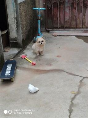 昨天捉狗的绳子断了跑到我家的