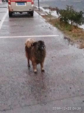 可怜的狗狗
