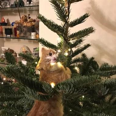 这些把圣诞树玩坏了的宠物们