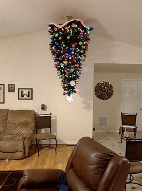 为了避免宠物们破坏圣诞树,铲屎的也是蛮拼的