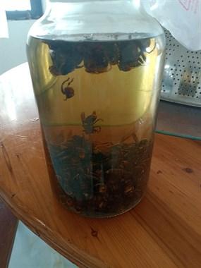 地洞蜂酒,老蜂2元一个,特价蜂酒200块一瓶