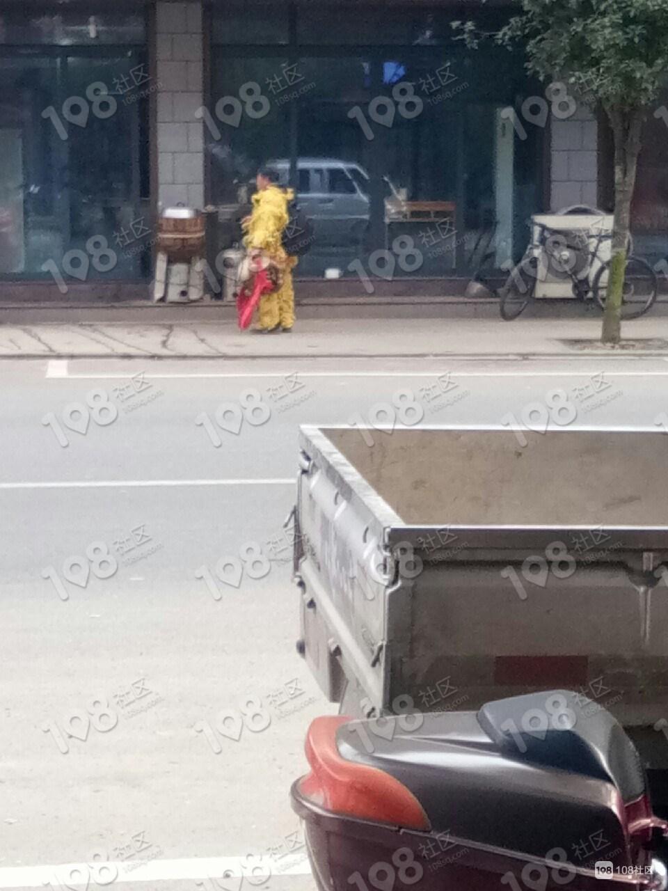 沿街店铺吓怕了!一黄毛红头狮子来到儒岙,大家当心