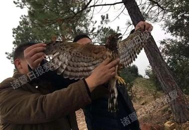 拿2斤橘子在陈宅换了只鸟,专家竟说是世界濒危物种