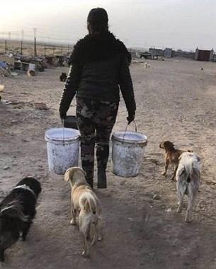 紧急!一起帮助西北戈壁滩上数千只流浪狗~饥寒交迫!