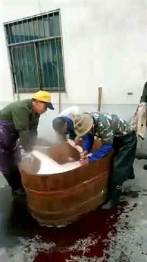 【不看不睡觉】高级享受!几百斤的猪躺在木桶里洗澡