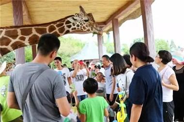 25-30号杭州野生动物园一日游348元/一大一小