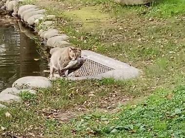 半夜听到此起彼伏的凄厉叫声!德清民间说法:猫嚎年到?
