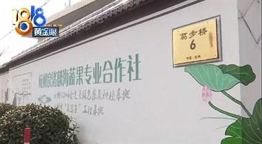 余杭这蔬菜基地缺人手,农业局长马上带头割了600斤菜!