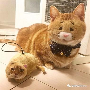 """猫主子和玩偶""""换脸"""",竟然毫无违和感!"""