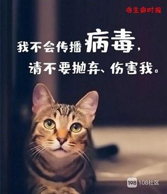 宠物不会传染病毒,请善待每一个生命
