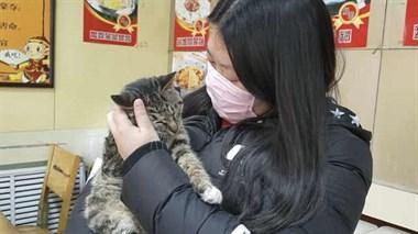 女孩家寄养5只猫,呼吁别遗弃宠物