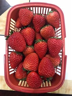 天台小伙终于买到了好吃的草莓