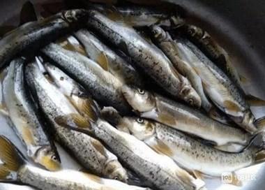 3种价格不便宜的鱼,常吃这几种鱼的话,是土豪无疑了