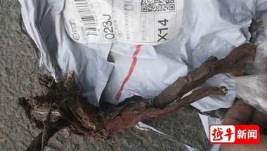 绍兴一企业花18.5万买口罩,结果收到一箱树枝…