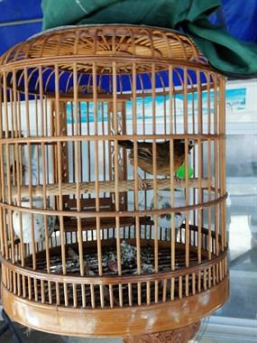 【转卖】鸟