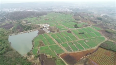 疫情当下嵊州榧农被愁煞!买下4吨专用肥,却运不进地