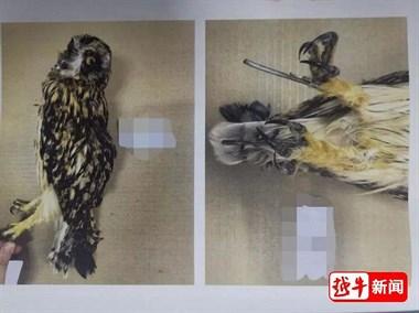 非法交易、杀害濒危野生动物!新昌10人被提起公诉