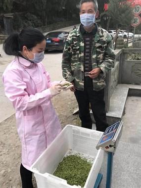 有魄力!15天收购茶叶近万斤 天台茶叶公司女老板火了