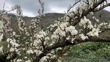桃花、樱花齐开放!嵊州这些地方赏花最佳,可别错过