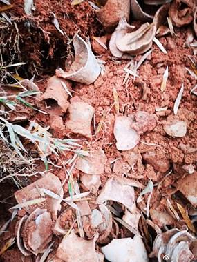 发财了!衢州老乡上山挖笋,竟发现很多神秘瓦罐…